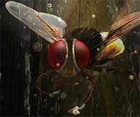 Movie Review : Makkhi | India Forums